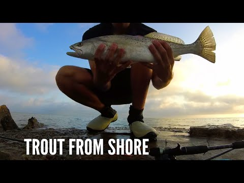 Topwater Trout From Shore! - Corpus Christi Texas