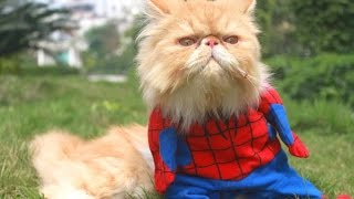Коты лазят как человек паук
