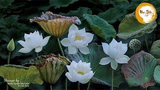 Nhạc Thiền Tĩnh Tâm - tha thứ để tâm hồn thư thái, an lạc ngủ ngon #Mới