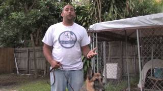 Dog Training & Care : Ideas For Dogs That Get Out Of A Fence