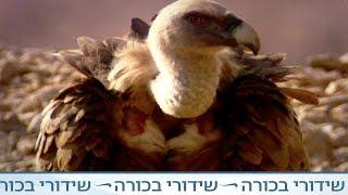 זן נדיר - עופות דורסים
