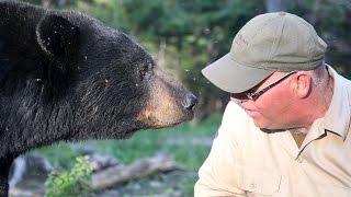 Canadian Bear Whisperer