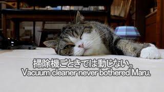 掃除機を気にしないねこ-maru-does-not-mind-the-vacuum-cleaner
