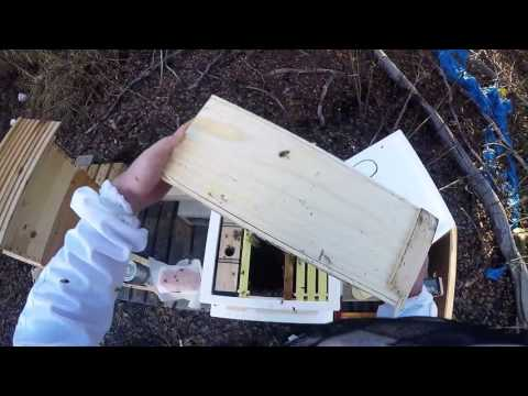 Starting Beekeeping – Installing Bees 2016 in Alaska vlog day 1