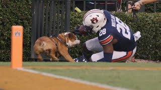 Auburn's Boobee Whitlow collides with Mississippi State mascot Bully