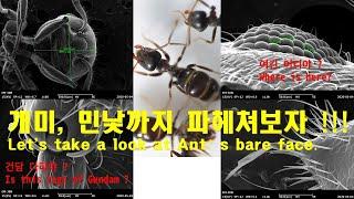 KOR, ENG) 1억짜리 현미경으로 개미의 모든것을 …