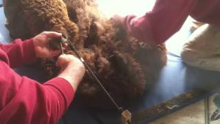 Noodling alpaca fleece 2012