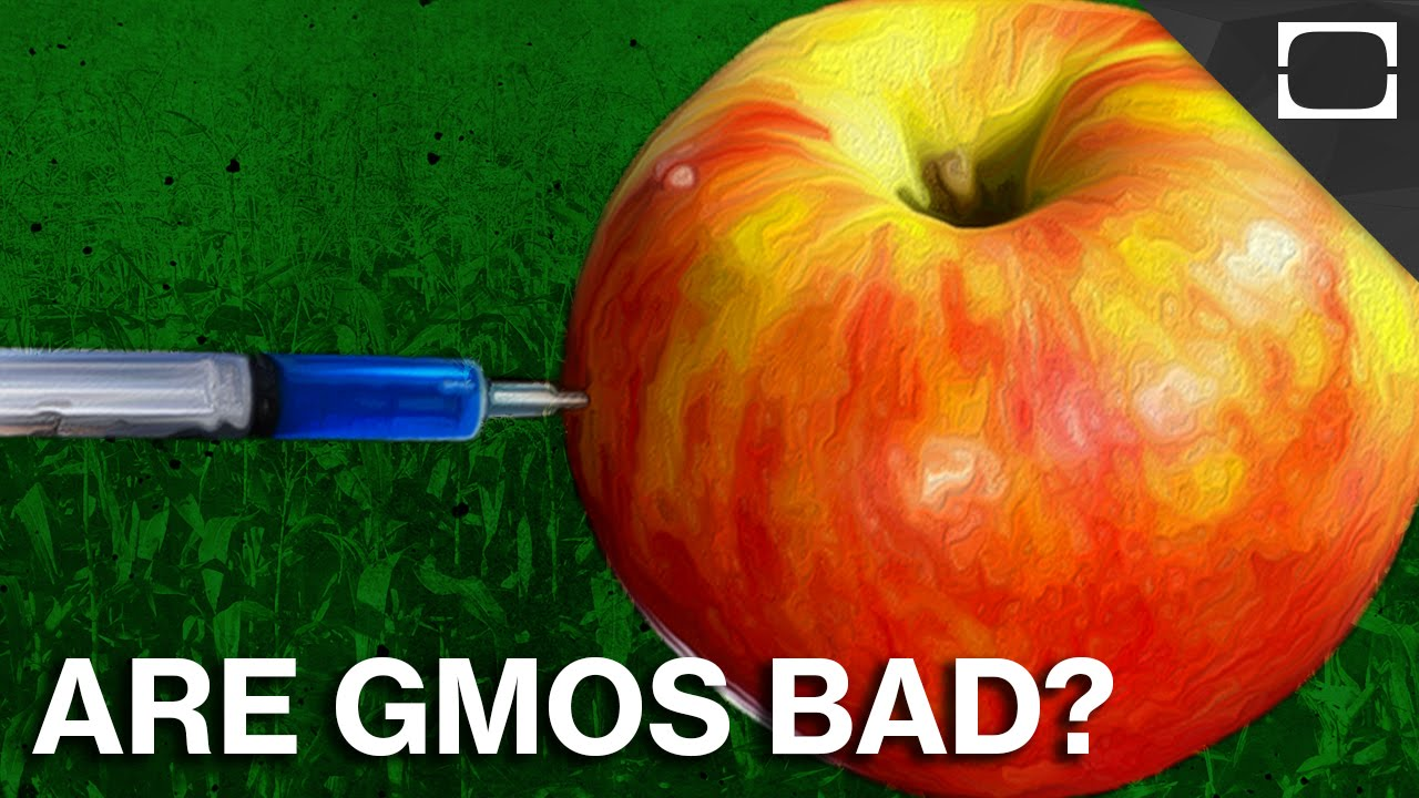 12 Advantages and Disadvantages of Genetically Modified