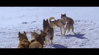 Белый плен (2005) трейлер