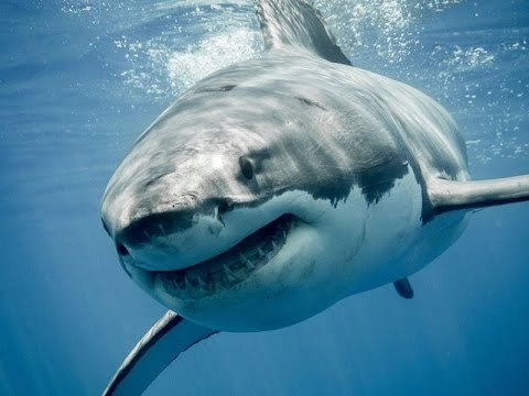 Deadly Ocean Animals   National Geographic   Ocean Documentary (Earth Documentaries)