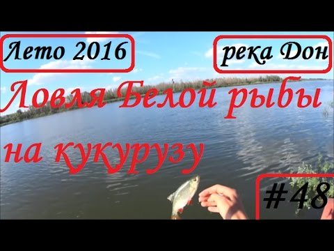 БЕЛАЯ КУКУРУЗА -