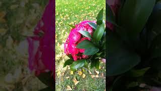 Букет Невесты 18.08.2018