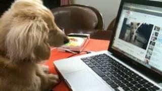 YouTubeの中で吠える犬を凝視して、最後には。。。