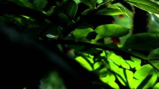 Canon 600D Видео Тест(Смотреть обязательно в 1080p!!! == Видеотест камеры Canon EOS-600D. Сами отрезки видео не обрабатывались, только..., 2012-08-12T10:15:45.000Z)