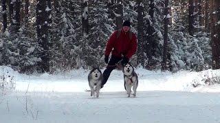 Снежные псы Верхней Салды