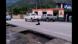Dog stops traffic on busy road in Vilcabamba, Ecuador