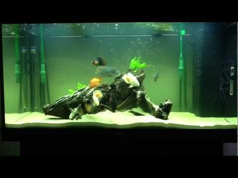 Aquarium Set Up South American Cichlids Youtube