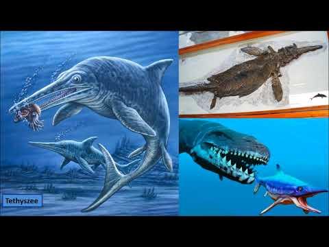 Evolutie En Geologische Tijdschaal: Van Cambrium Tot Dinosaurus, Pleistoceen En Antropoceen