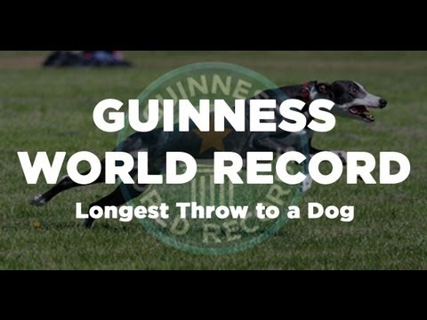 GUINNESS WORLD RECORD - Longest Throw Caught by a Dog @ 402 feet (Davy Whippet)