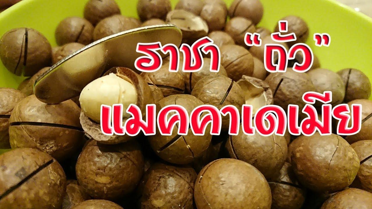 วิธีกระเทาะเปลือก แกะแมคคาเดเมีย ด้วยเครื่องแกะจิ๋ว ราชาถั่ว อร่อย มันจนหยุดไม่ได้ Macadamia Nut