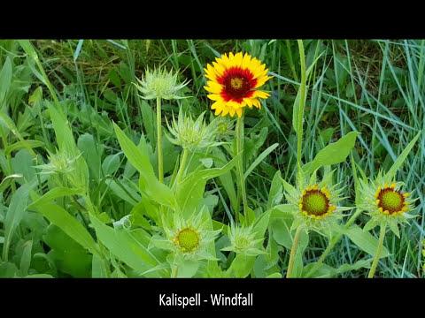Kalispell ~ Windfall