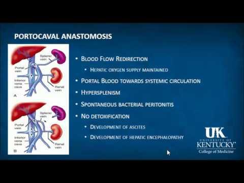 Keyword Review: Hepatology - Dr. Rebel