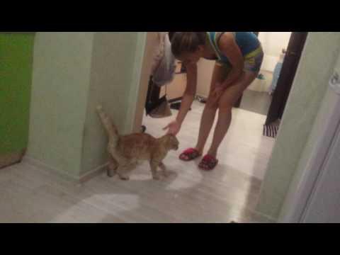Девушка обидела кота