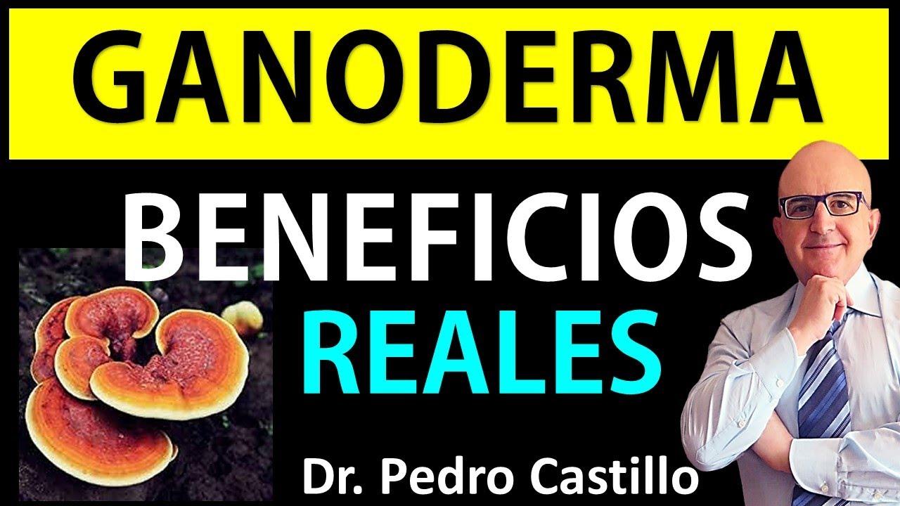 LA VERDAD sobre GANODERMA LUCIDUM ✅ BENEFICIOS del hongo REISHI para su salud 👨⚕️ DR PEDRO CASTILLO