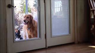 WHO LET THE DOG'S OUT! CUTE DOG OPENS DOOR! PLAYTIME WITH BO DOG!