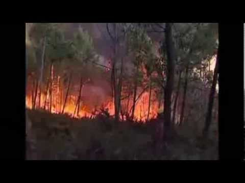 Out of control: another rages Firefighters in Portugal wildfire