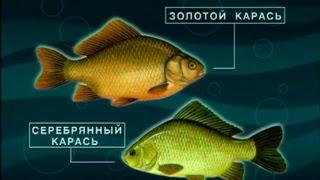 Диалоги о рыбалке -161- Секреты ловли карася