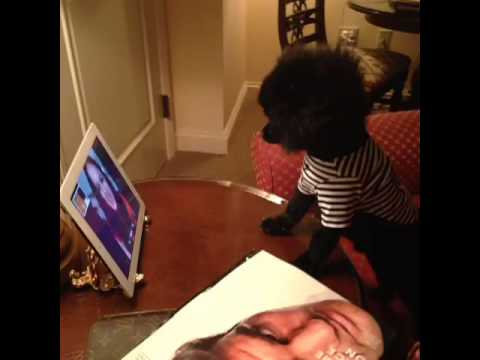 Yikes!!! Beware of crazy dog ladies – BarkleyThePom's Vine