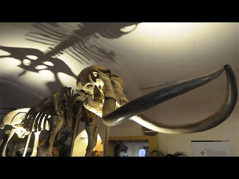 Is this 25,000-Year-Old Structure Built of the Bones of 60 Mammoths?