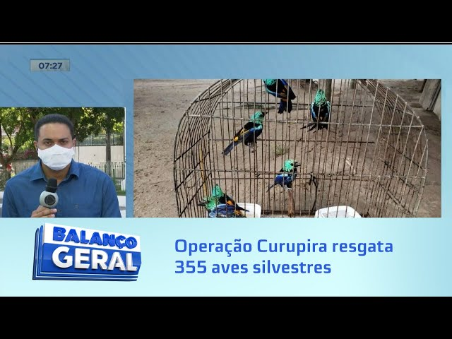 Operação Curupira resgata 355 aves silvestres, entre elas oito na lista de extinção