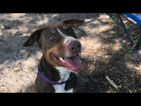 VOLUNTEER WITH ME | ANIMAL SHELTER