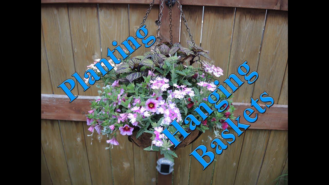 Youtube Hanging Flower Baskets : Let s plant a hanging basket