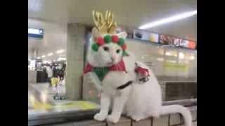 Reindeer Kumichan enjoyed Xmas walking = トナカイ・クミちゃん、クリスマスのお散歩を満喫しました