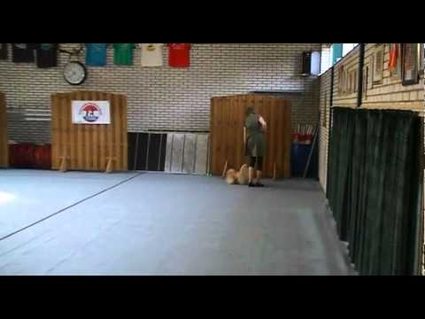 Chanti en Chakota – dog dance video wedstrijd