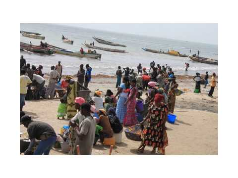 Women in The Gambia Fisheries Sector: Improved trade policies could address gender inequalities