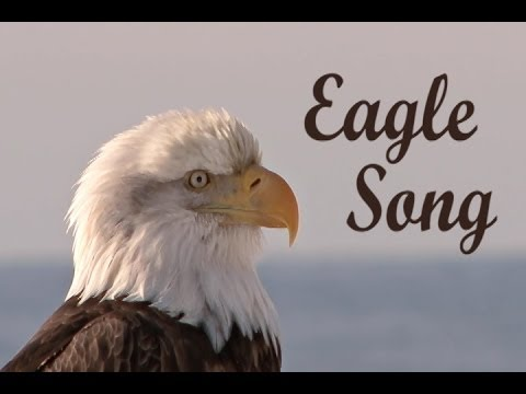 Eagle Song - Camera Strapped to Eagle - EPIC