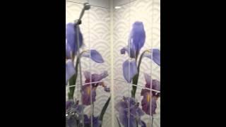 Панели ПВХ в ванной(Быстро, дешево и просто., 2016-04-11T07:35:02.000Z)
