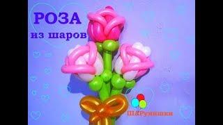 Роза из шаров двухцветная/Rose of two-color balloons