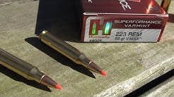 210 YARDS BALLISTICS GEL TEST:  .223 Hornady Superformance Varmint V-MAX