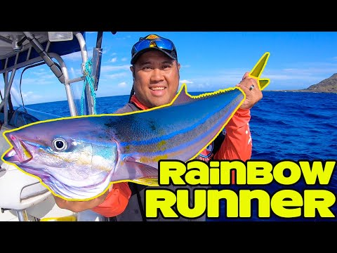 Live Bait Fishing In Hawaii | Rainbow Runner Fishing | Fishing In Hawaii | Hawaii Fishing