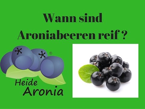 aronia rezepte aronia fruchtaufstrich und aronia marm doovi. Black Bedroom Furniture Sets. Home Design Ideas
