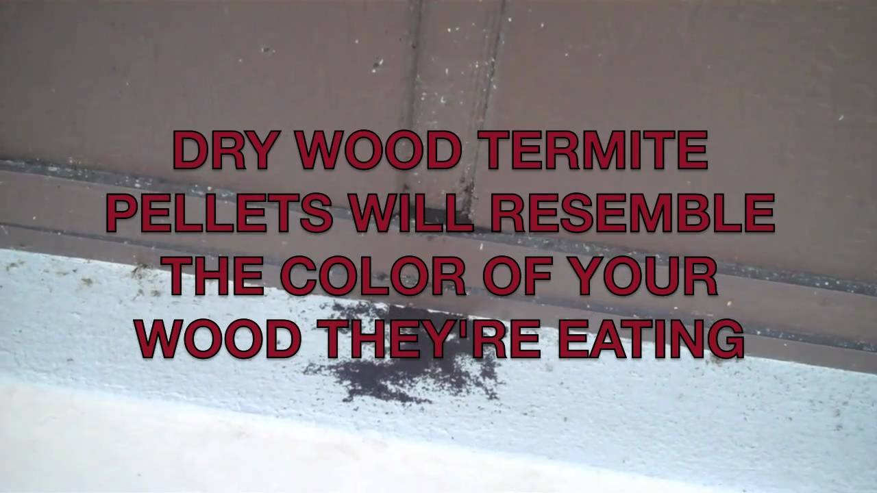 Spot Treat Your Dry Wood Termites Save With Nelsons Pest Control Inc Tampa Fl