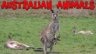 Australian Animals!  Learn Australian Animals for Kids