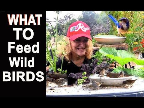 BEST Bird Seed Food To Feed Wild Birds-We Feed 1000's Daily-How To Attract Insect Eaters To A Garden
