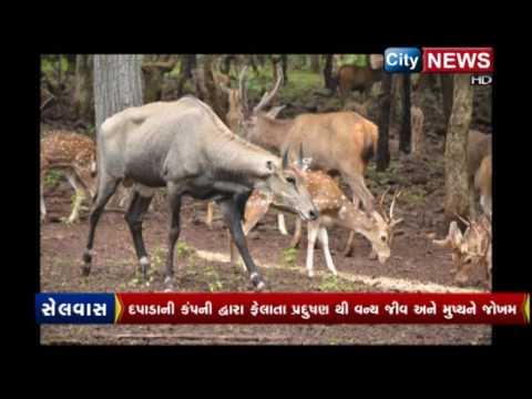 Pollution dapada satmaliya deer park