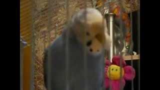 попугай Митюша разговаривает (девочка).AVI